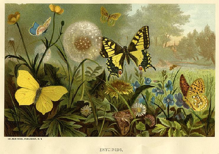 PRANGbutterflies